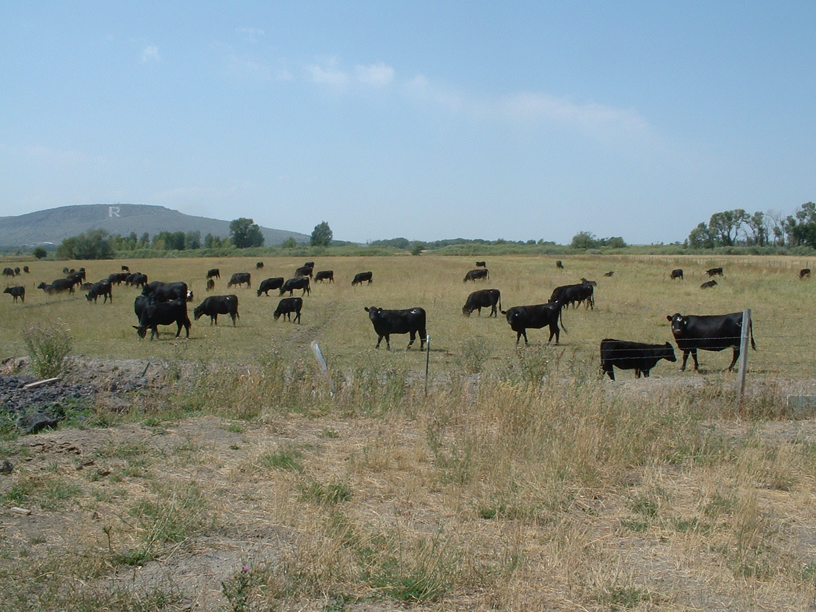 We develop comprehensive ranch management plans to maximize ecologic, investment and recreation values. -