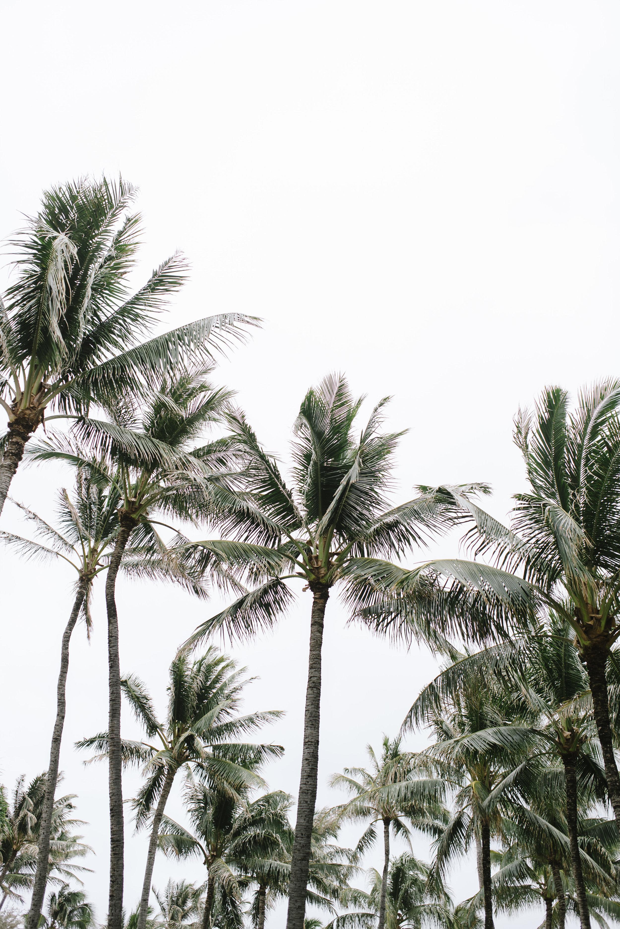 Hawaii 2018-1.jpg