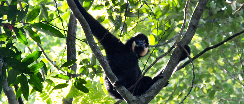Ziplining Laos 6.jpg