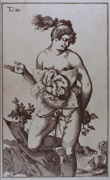 "OBS-Spigelius ""De Formato Foeto Tabulae"" Plates c.1645.png"