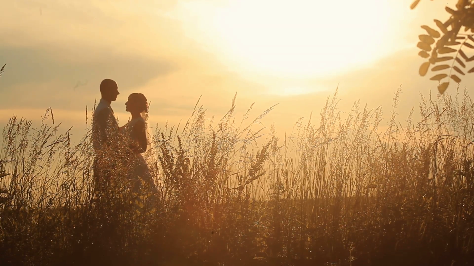 young-married-couple-softly-kissing-on-the-background-of-a-sunset-in-the-field_4owvaxrtg__F0000.png