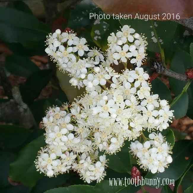 bunny-flower-Aug-2016LOWRES.jpg