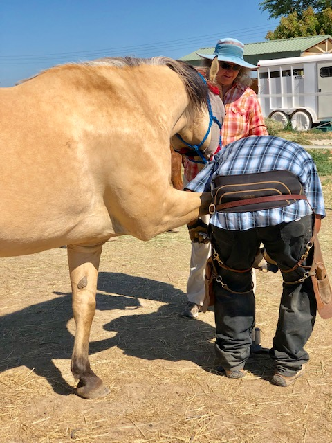 July 1st, Sunny getting his feet trimmed. He put his feet on the hoof stand and everything. Just an old pro!