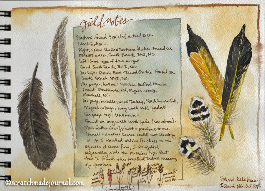 Watercolor feathers and feather identification via scratchmadejournal.com
