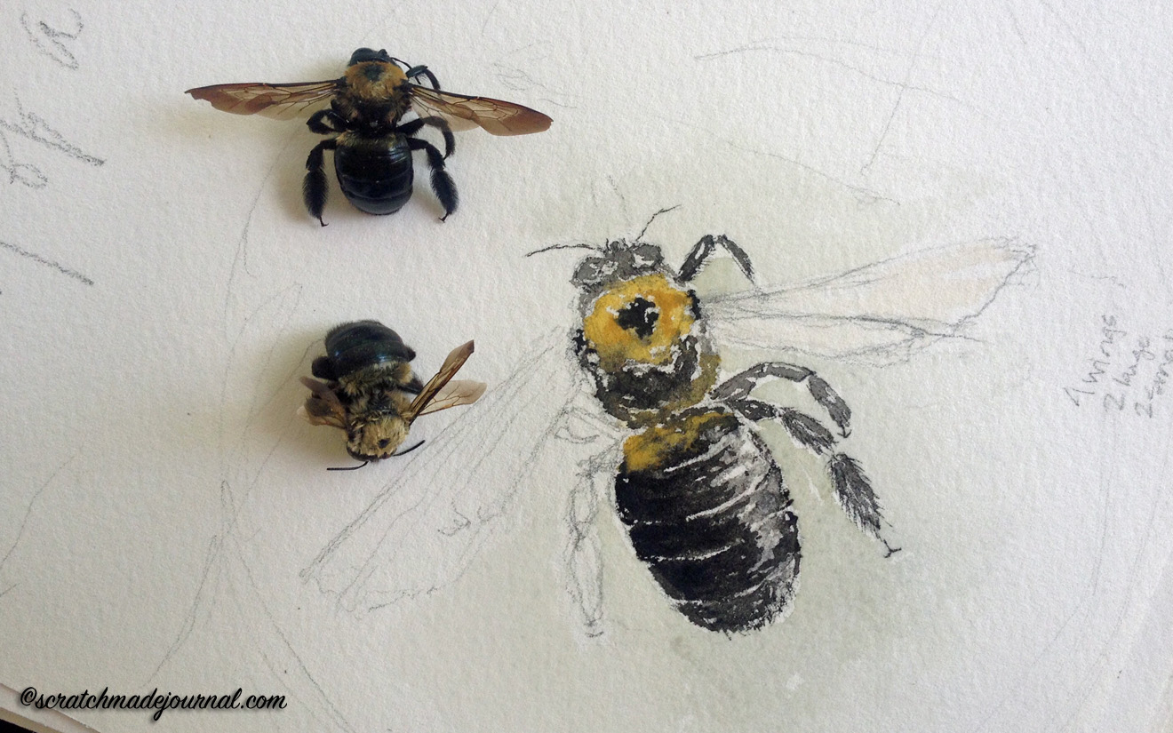 Sketching carpenter bees in watercolor - scratchmadejournal.com