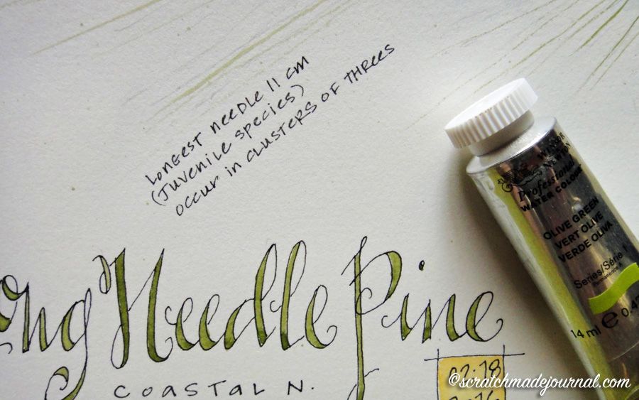 Example of Winsor & Newton Olive Green watercolor - scratchmadejournal.com