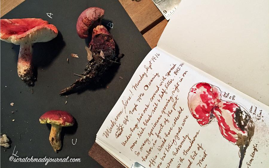 Tips on observing & studying mushrooms - scratchmadejournal.com