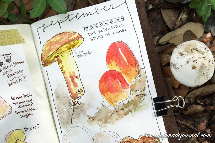 Tips for identifying & studying mushrooms  - ScratchmadeJournal.com