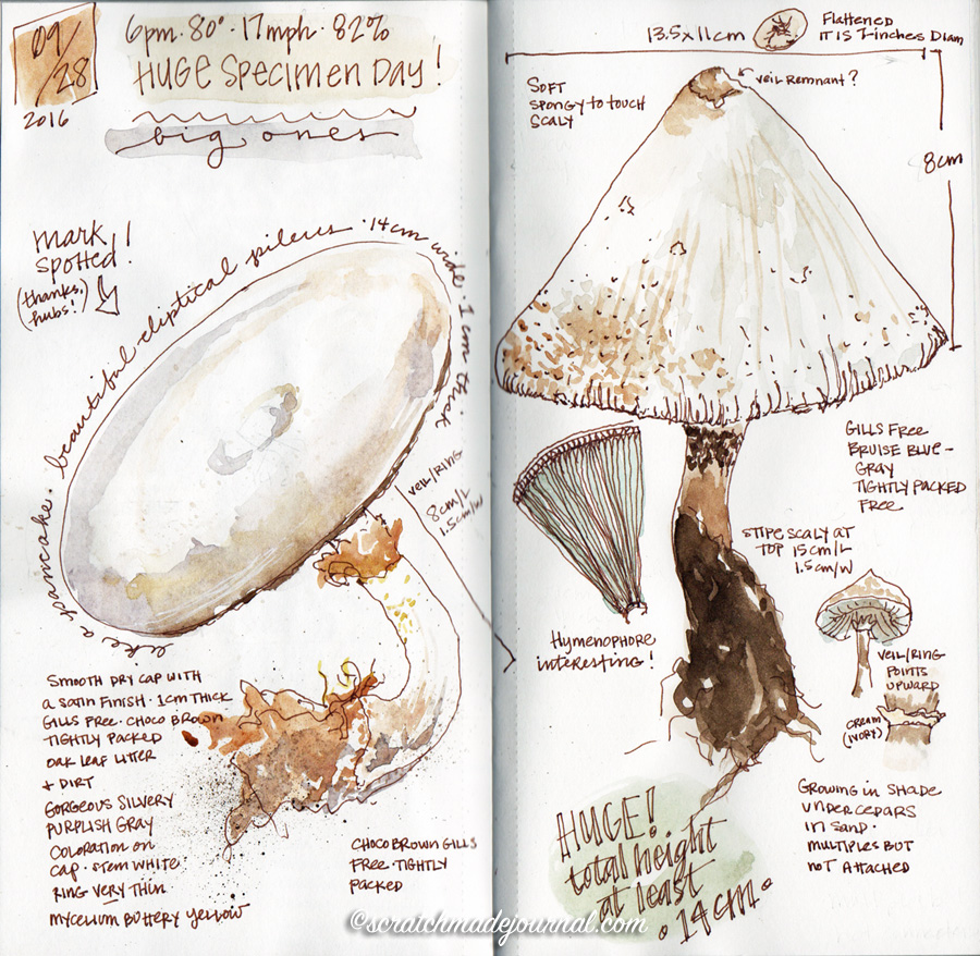 Mushroom field sketches in my nature journal - scratchmadejournal.com