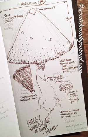 Nature journaling mushrooms field sketch example - scratchmadejournal.com