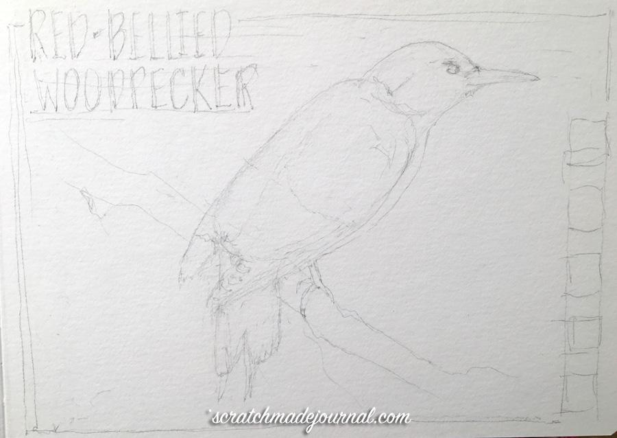 Red-bellied woodpecker sketch 1 ©scratchmadejournal.jpg