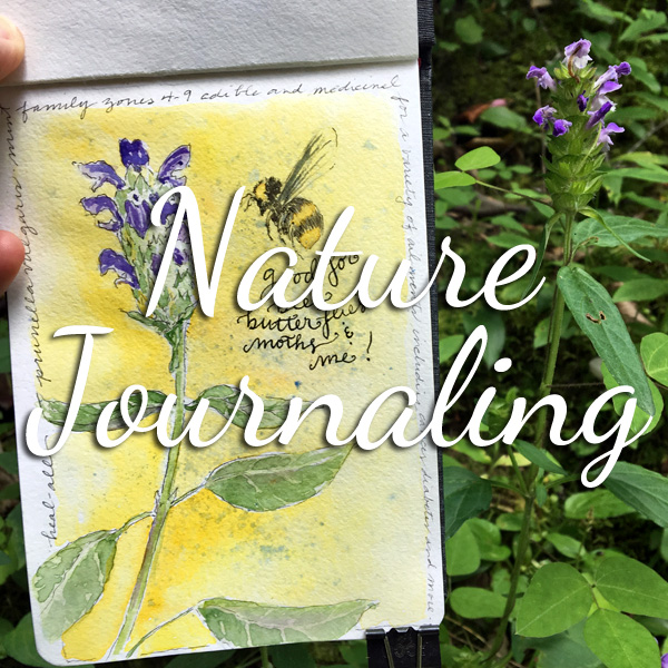 Learn about the art of nature journaling & more at ScratchmadeJournal.com