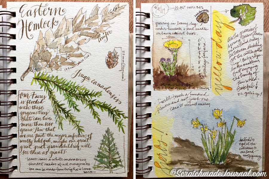 Watercolor nature sketches in the Strathmore Visual Journal - ScratchmadeJournal.com