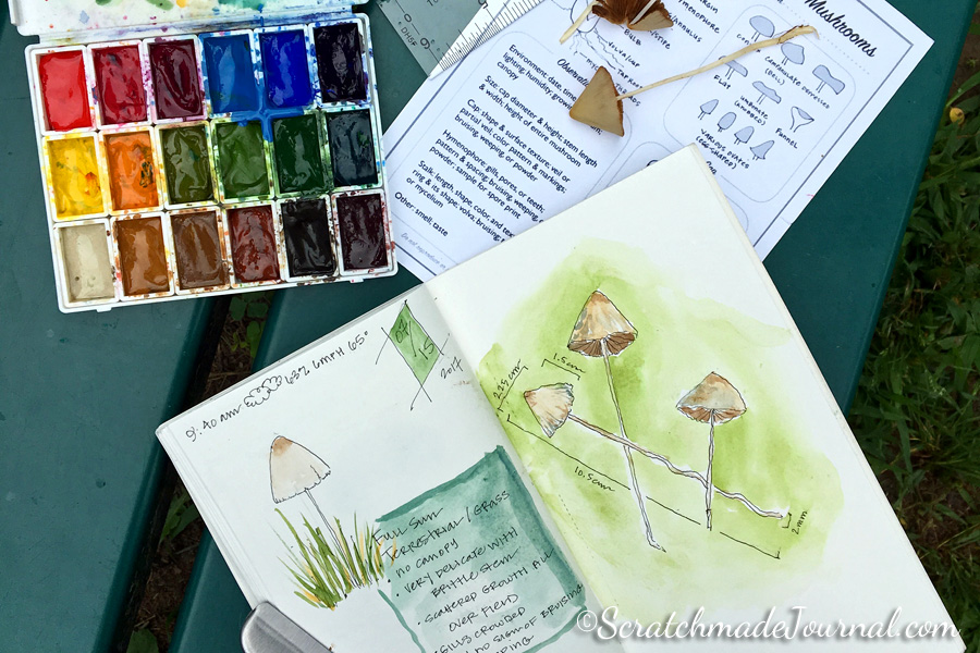 Mushroom nature journal and sketching mushrooms - ScratchmadeJournal.com