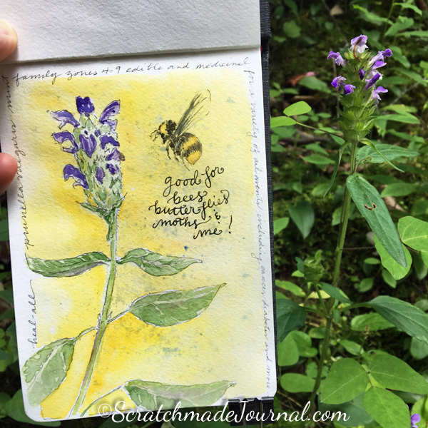 Bee balm herb watercolor sketch in my nature journal - ScratchmadeJournal.com