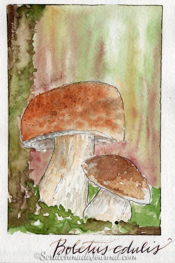 Boletus edulis mushrooms watercolor sketch - ScratchmadeJournal.com