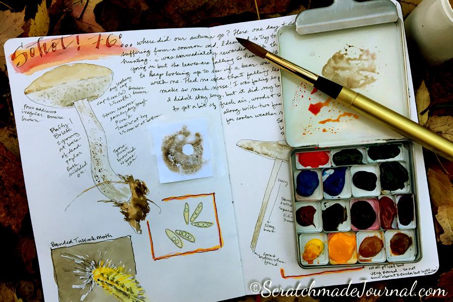 Mushroom sketch nature journal - ScratchmadeJournal.com