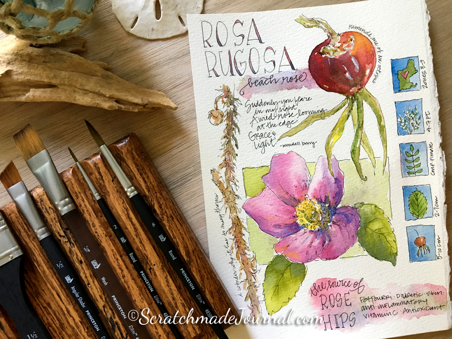Rosa Rugosa rose hips watercolor nature journal painting - ScratchmadeJournal.com