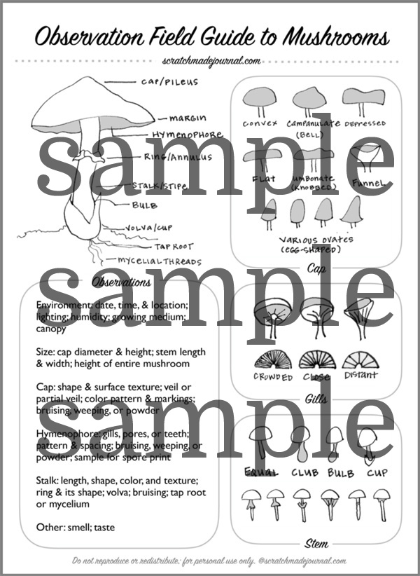 A printable field guide to studying mushrooms - ScratchmadeJournal.com