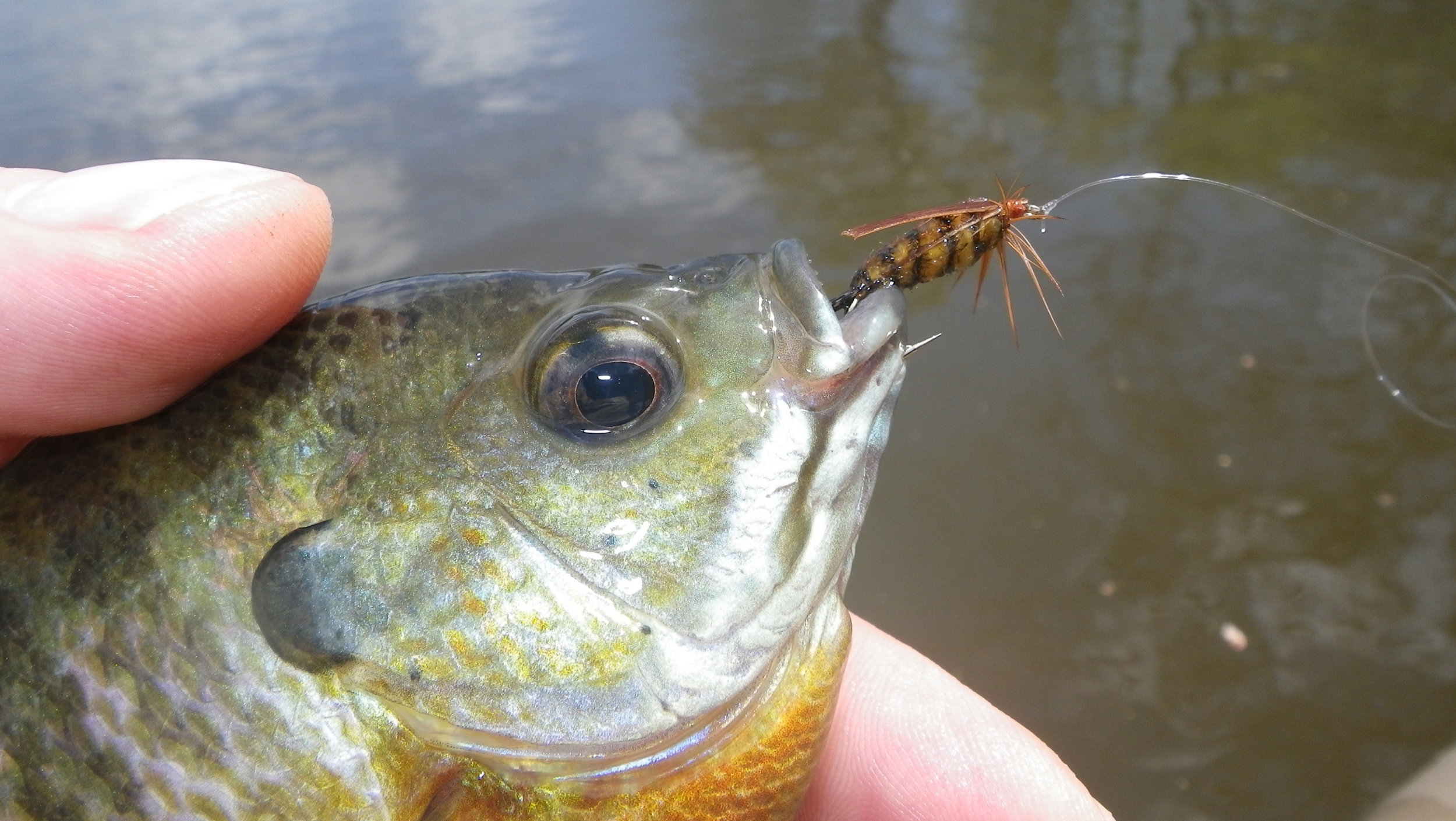 As the season progresses more substantail flies will out perform sparse soft hackles.