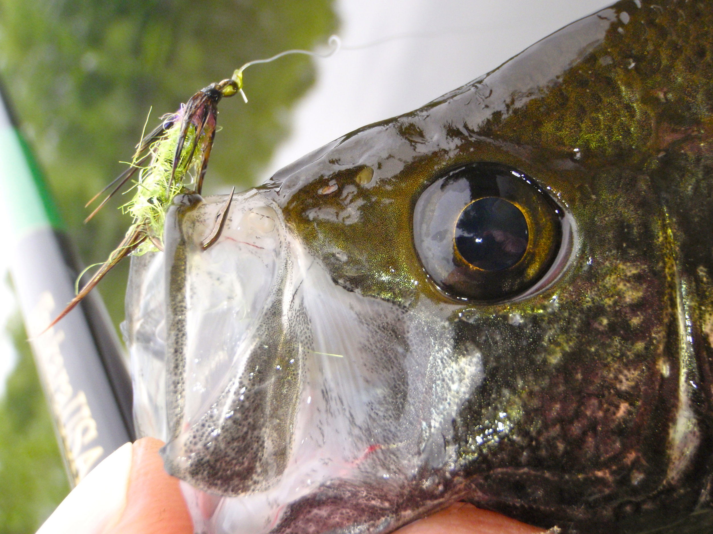 Soft hackles do a great job imitating aquatic insects and small baitfish