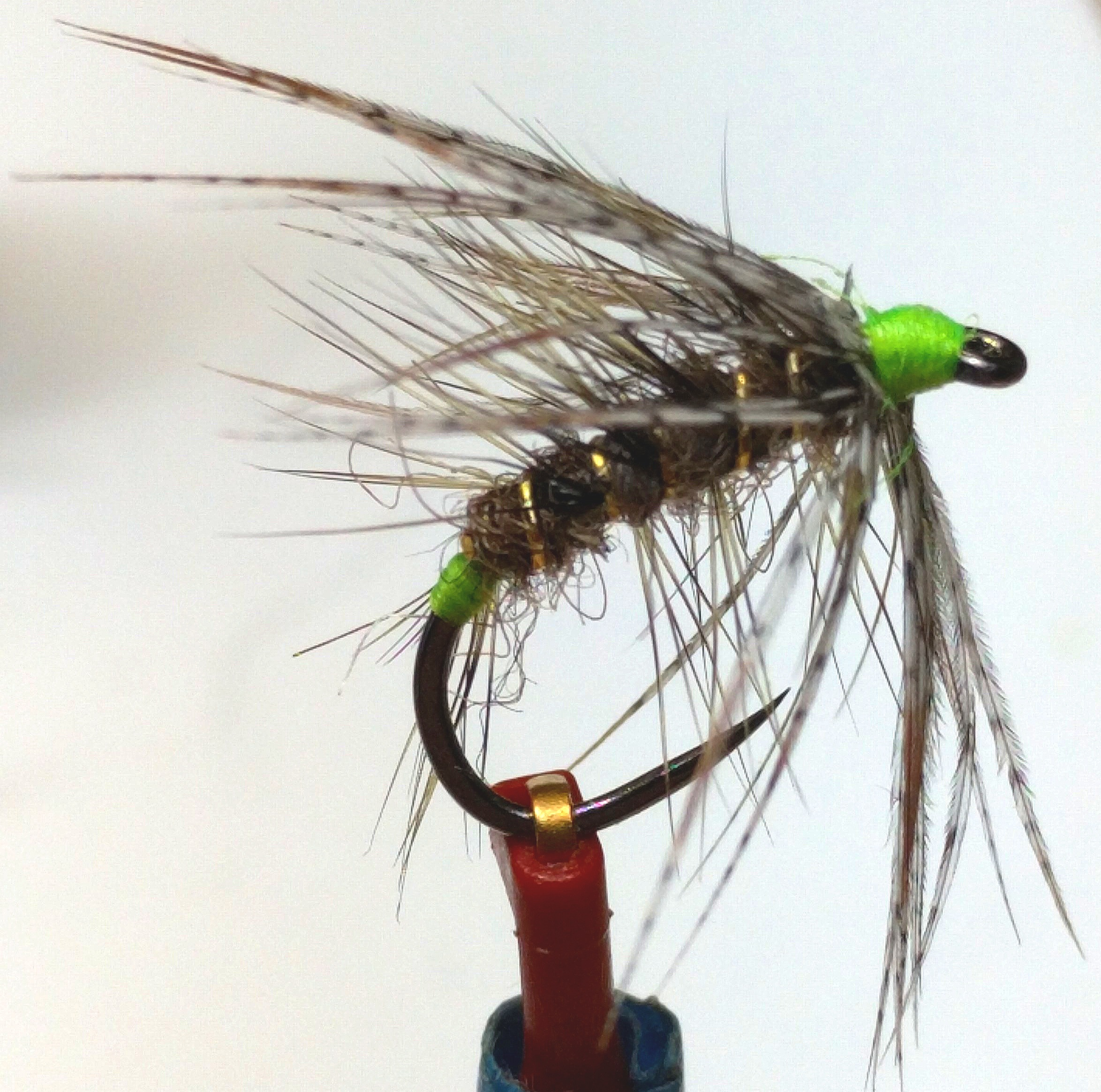 Jack Harford's Green Tail Caddis