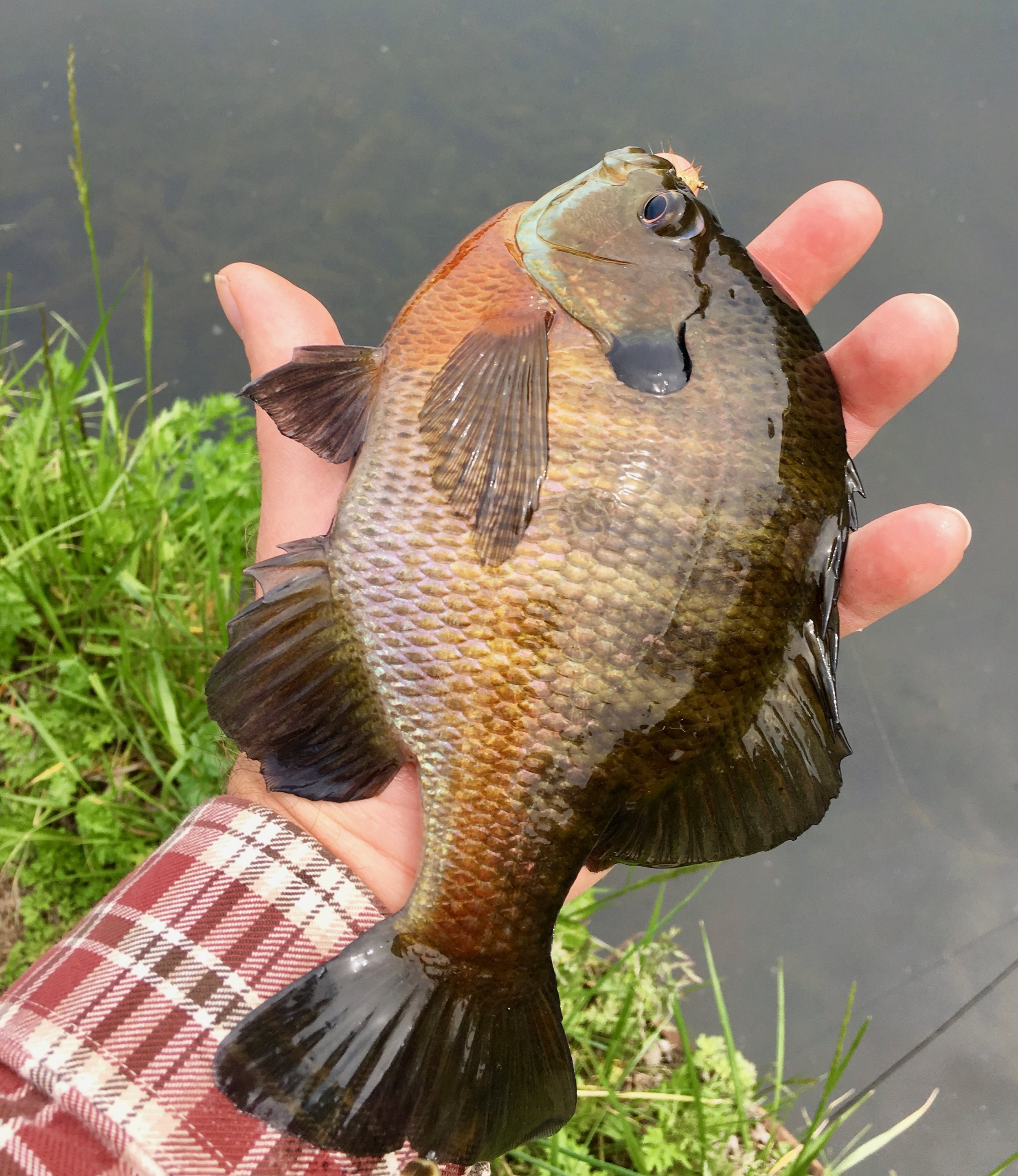 If you want to consistently catch hand sized panfish you need to change your tactics.