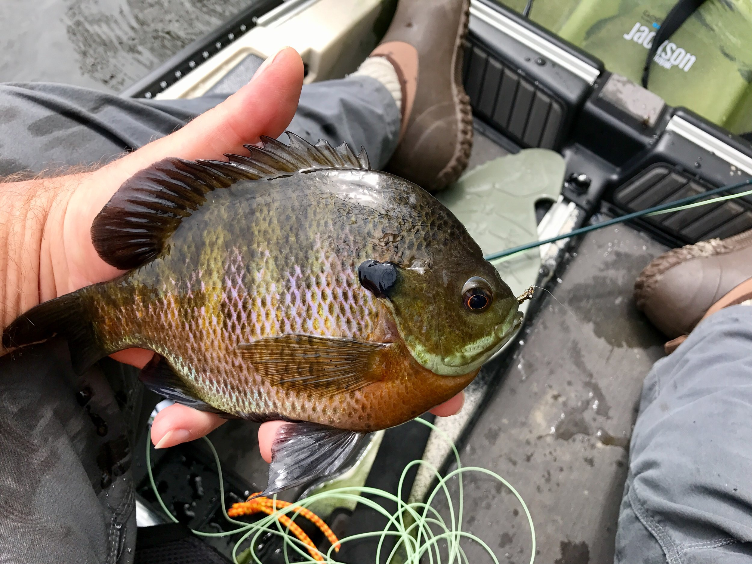 Larger bluegills often hold in deeper water. You will have to adjust your presentation methods and your fly selection to reach these fish.