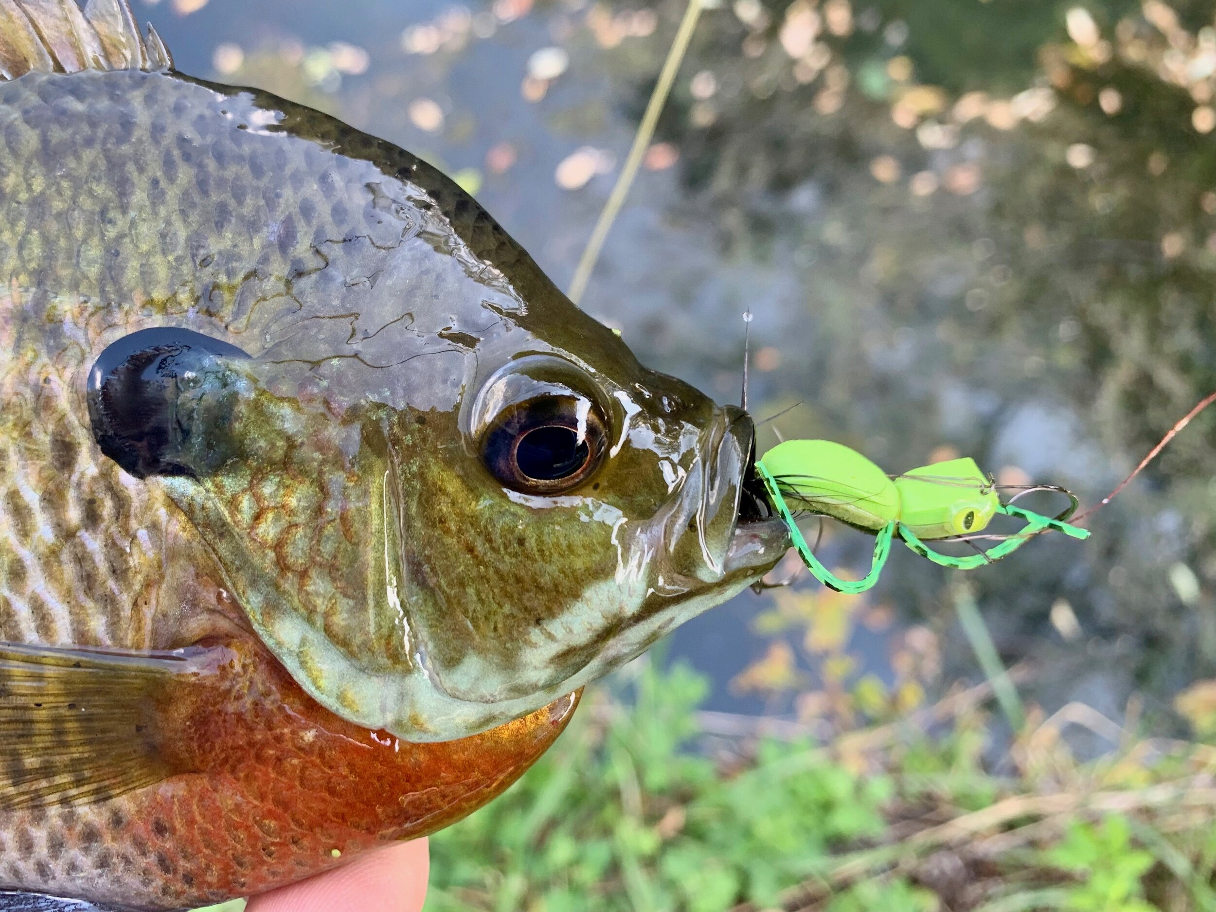 Is this fly any better than the original? Probably not, but the fish definitely give it a thumbs up!
