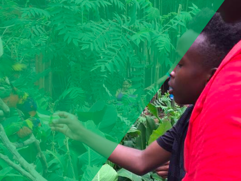 We believe all youth have the potential to flourish.     Give Today       Refer A Youth