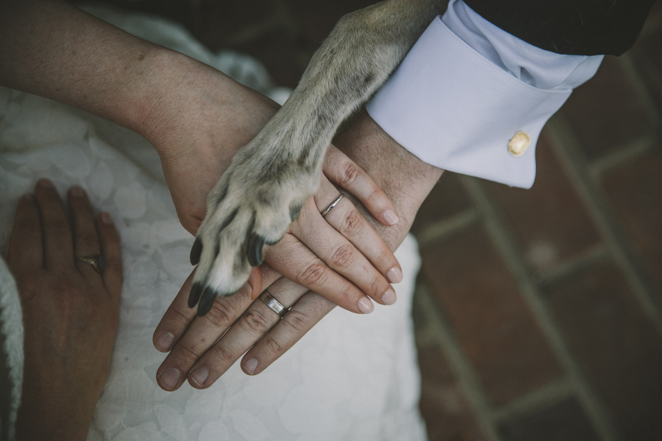 wedding rings and dog paw .jpg