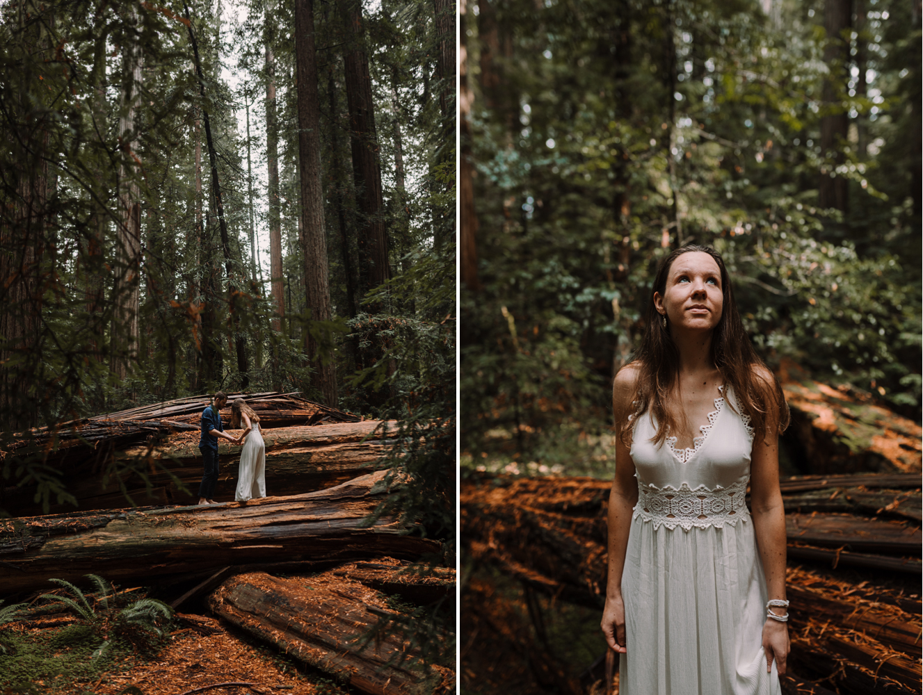 barbara o photography redwoods california elopement dc baltimore wedding photographer.jpg
