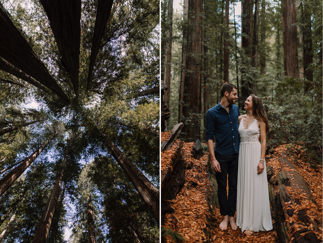barbara o photography redwoods california elopement dc photographer.jpg