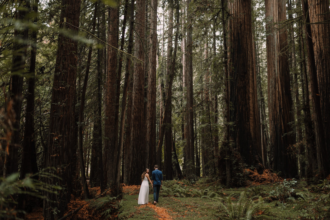 barbara o photography redwoods california elopement destination photographer-24.jpg
