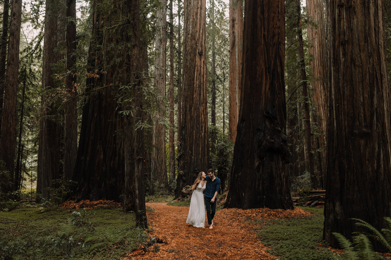 barbara o photography redwoods california elopement destination photographer-35.jpg