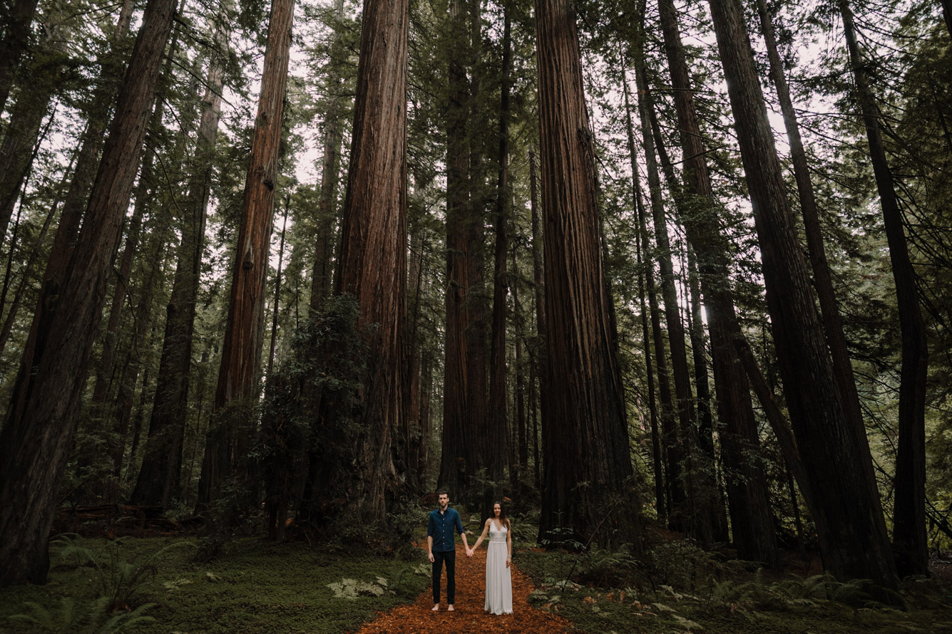 barbara o photography redwoods california elopement destination photographer-40.jpg