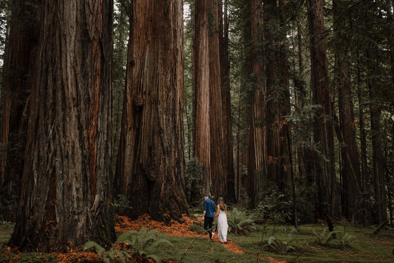 barbara o photography redwoods california elopement destination photographer-48.jpg