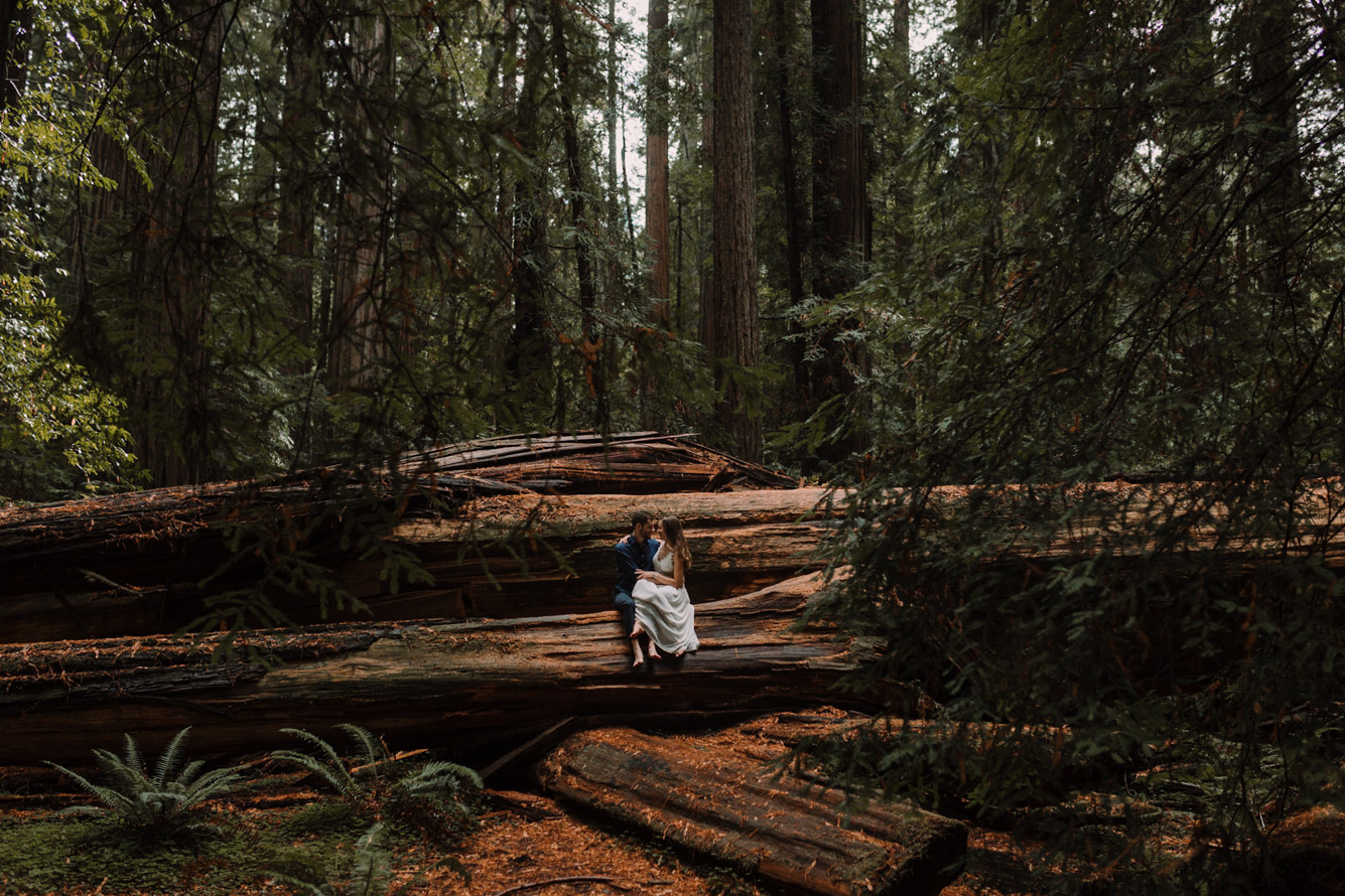 barbara o photography redwoods california elopement destination photographer-53.jpg