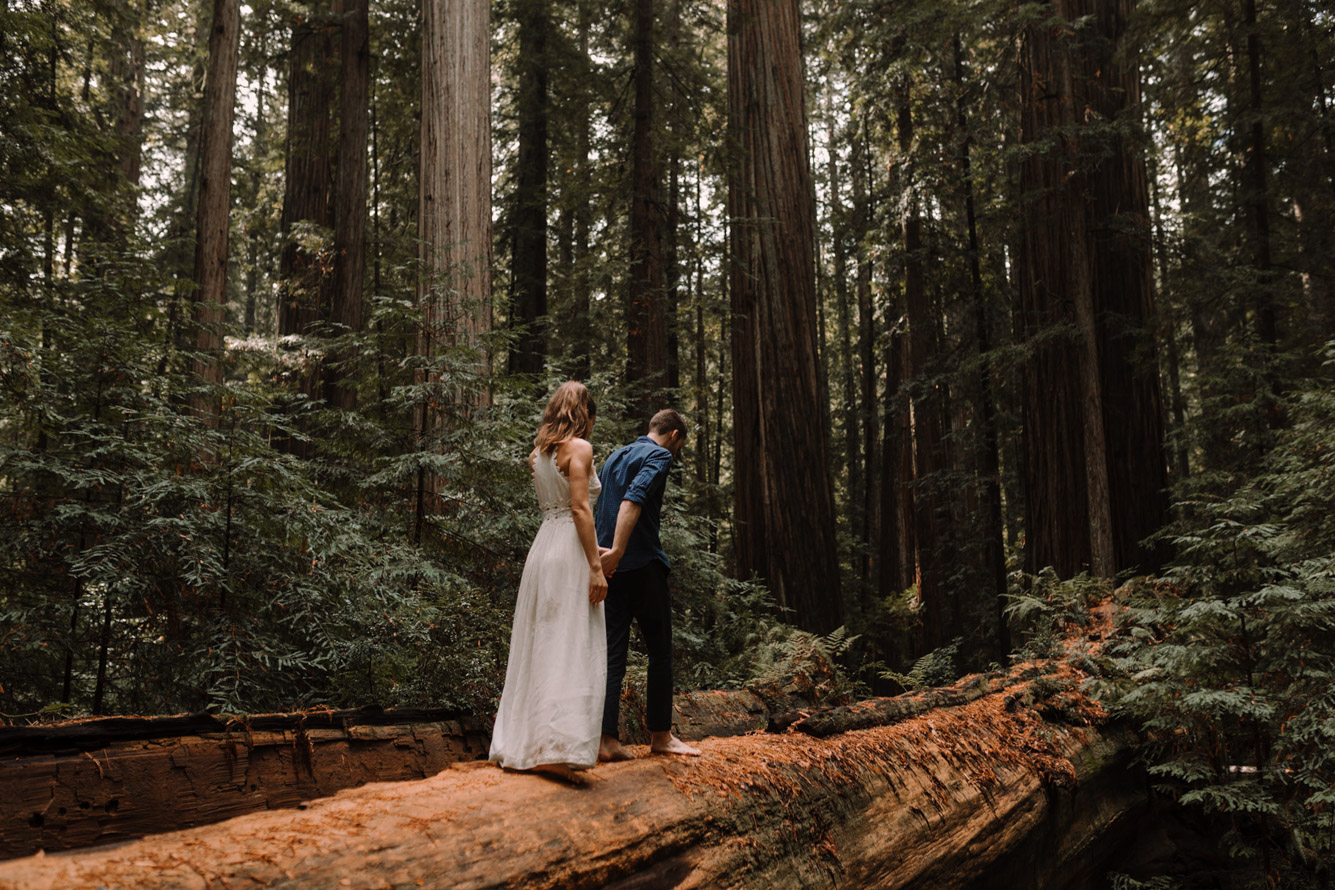 barbara o photography redwoods california elopement destination photographer-64.jpg