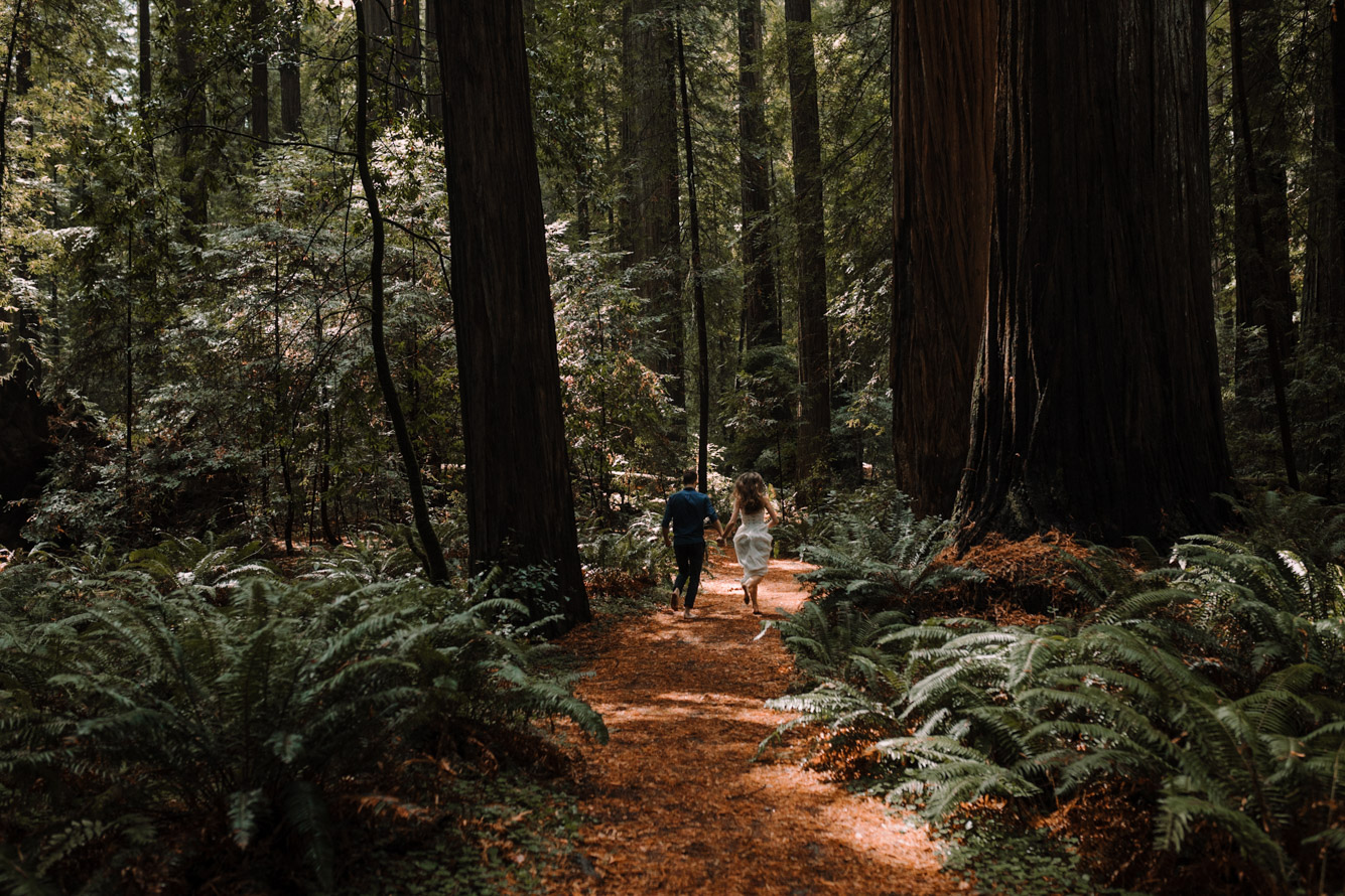 barbara o photography redwoods california elopement destination photographer-85.jpg