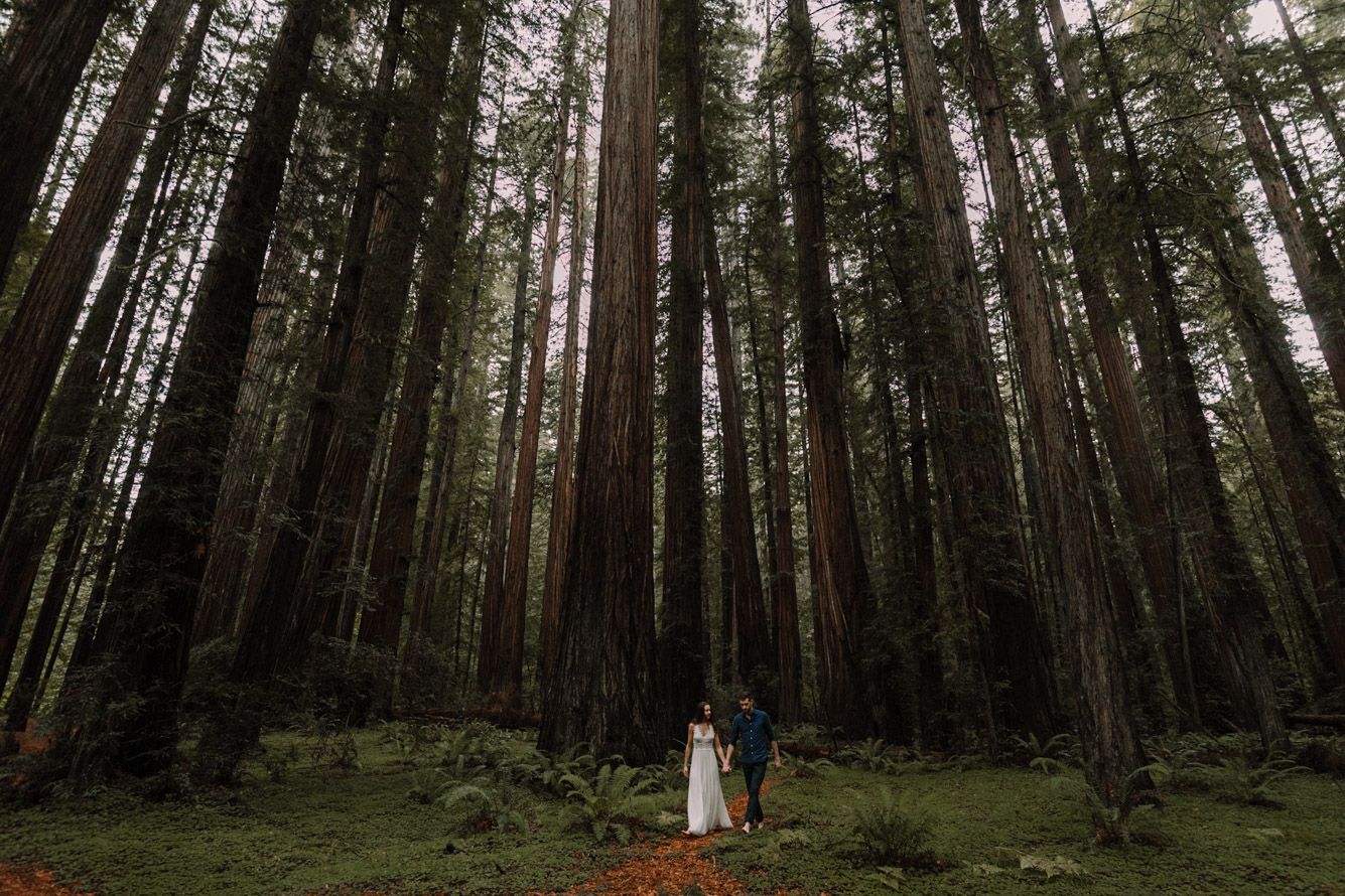 barbara o photography redwoods california elopement destination photographer-42.jpg