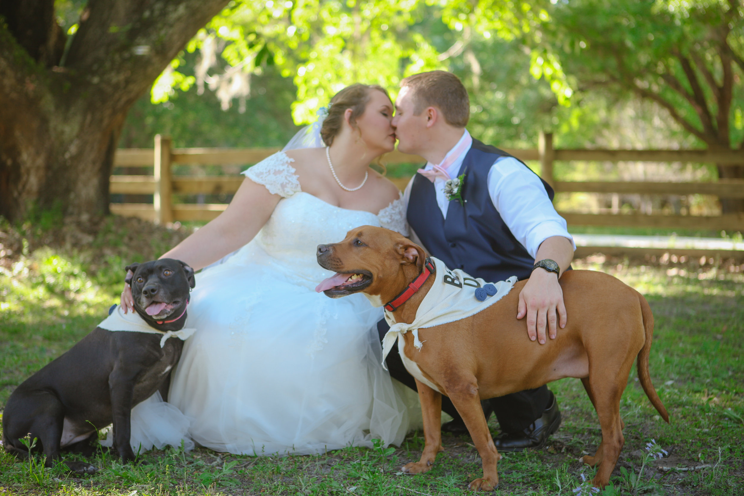 BrideGroomDogs