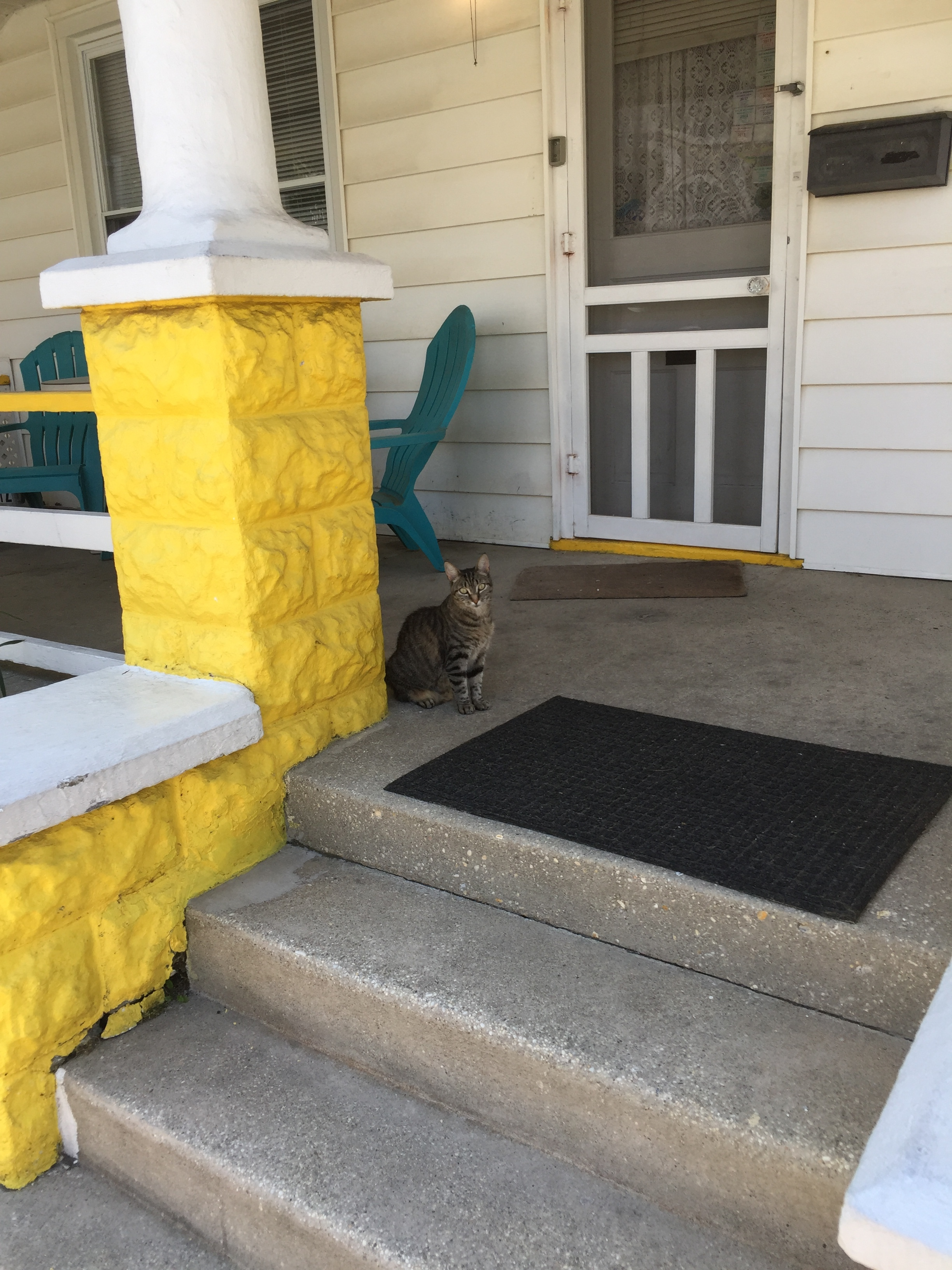 This feral cat is always hanging around the house.