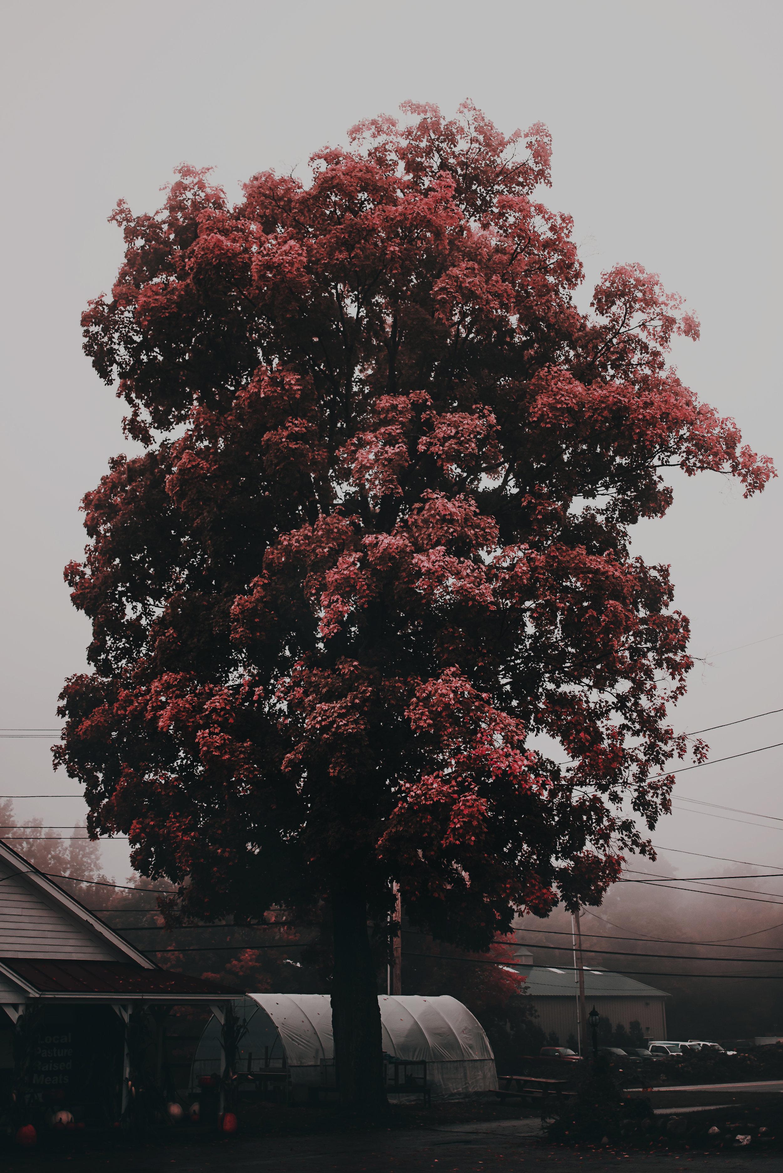Tree-(1-of-1)-2.jpg