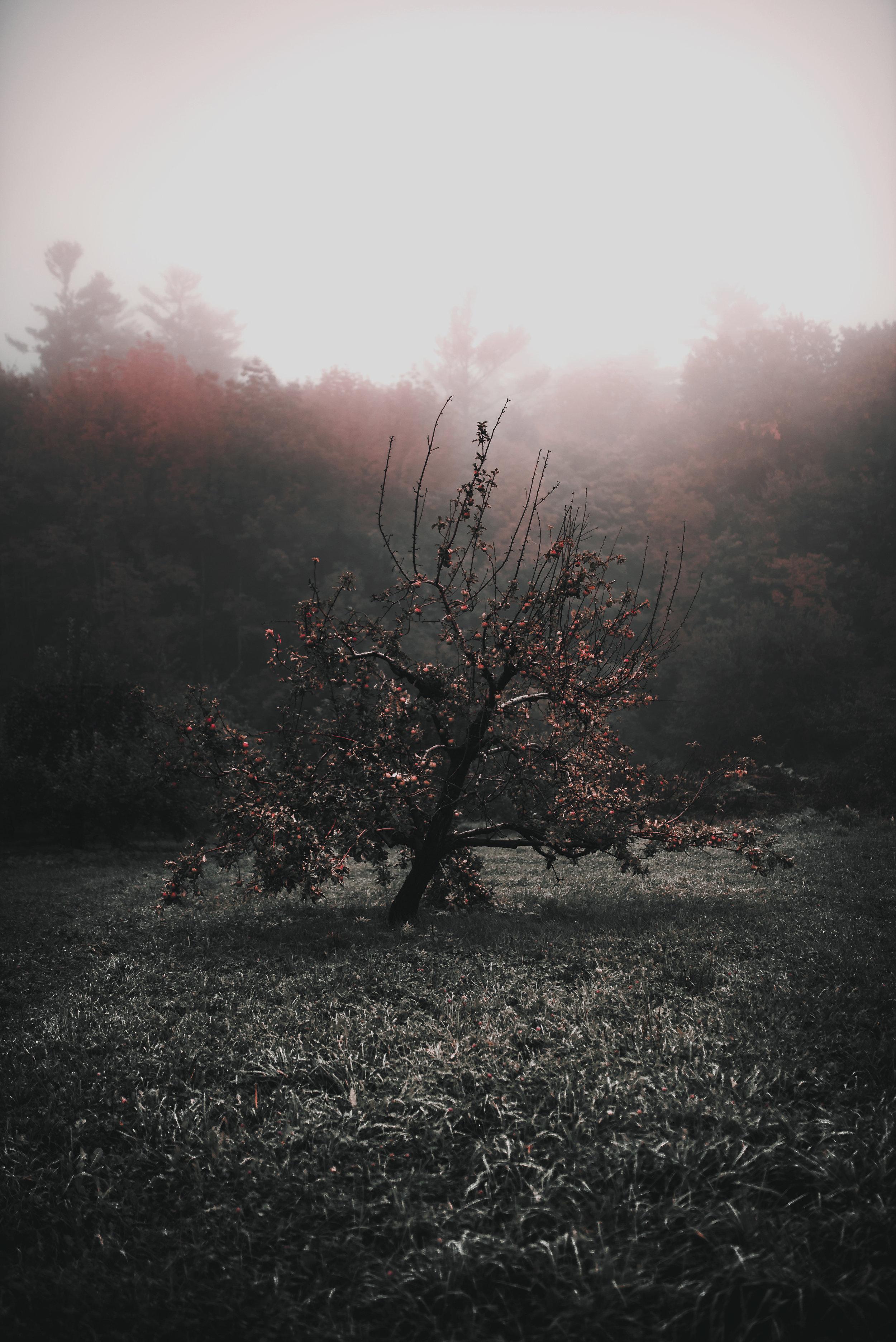 Apple-Tree-Un-Cropped.jpg