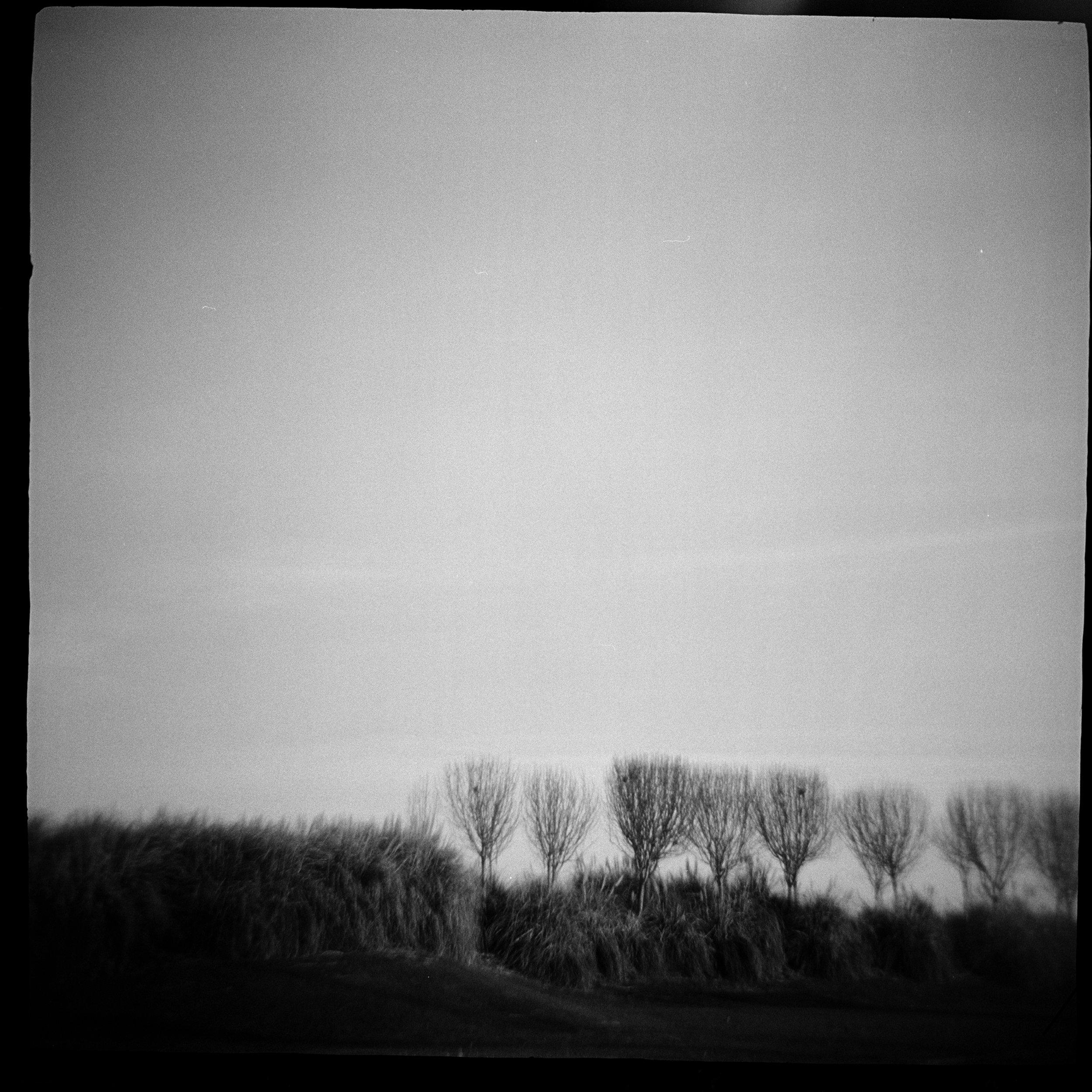 fork trees.jpg