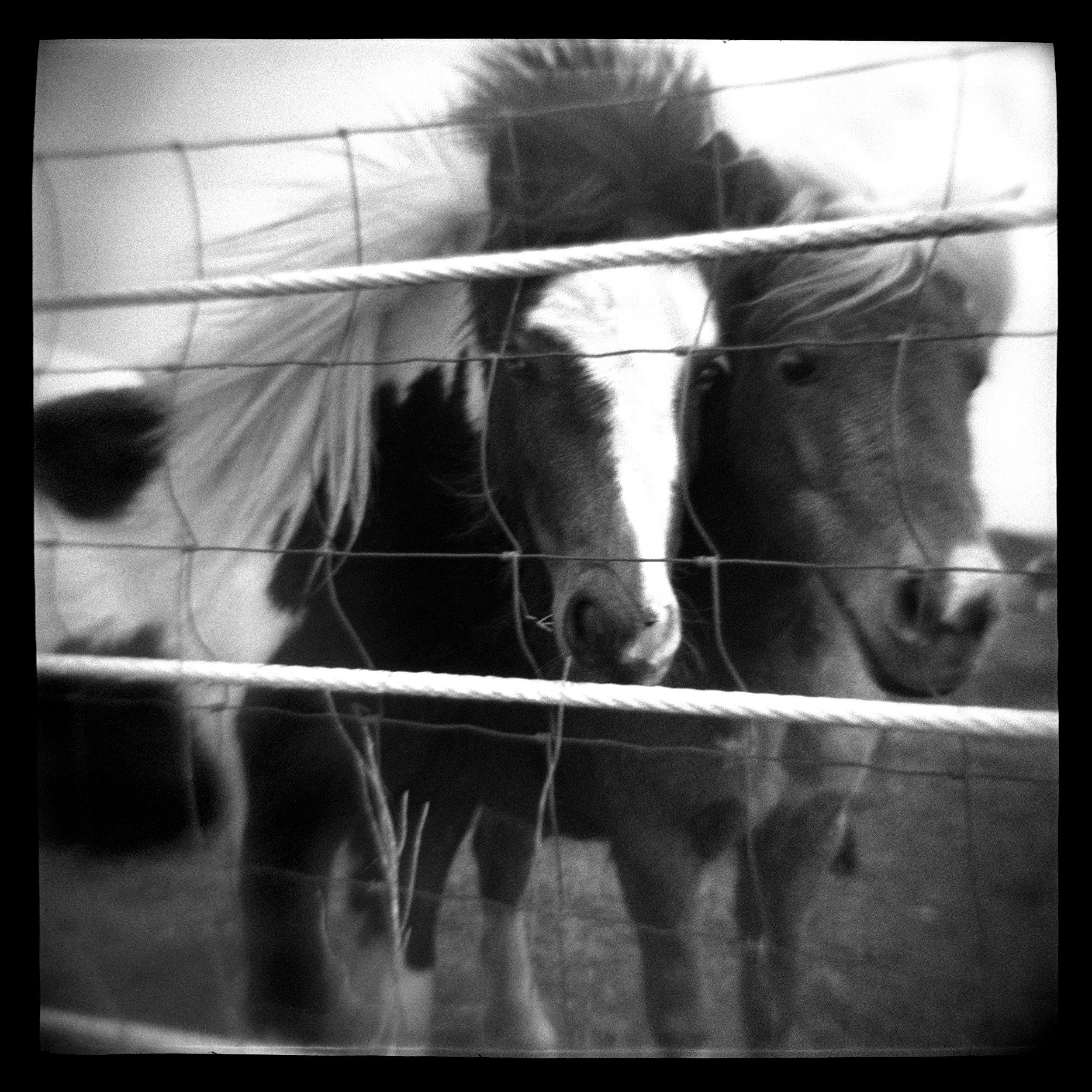 ponies 37.5x37.5.jpg