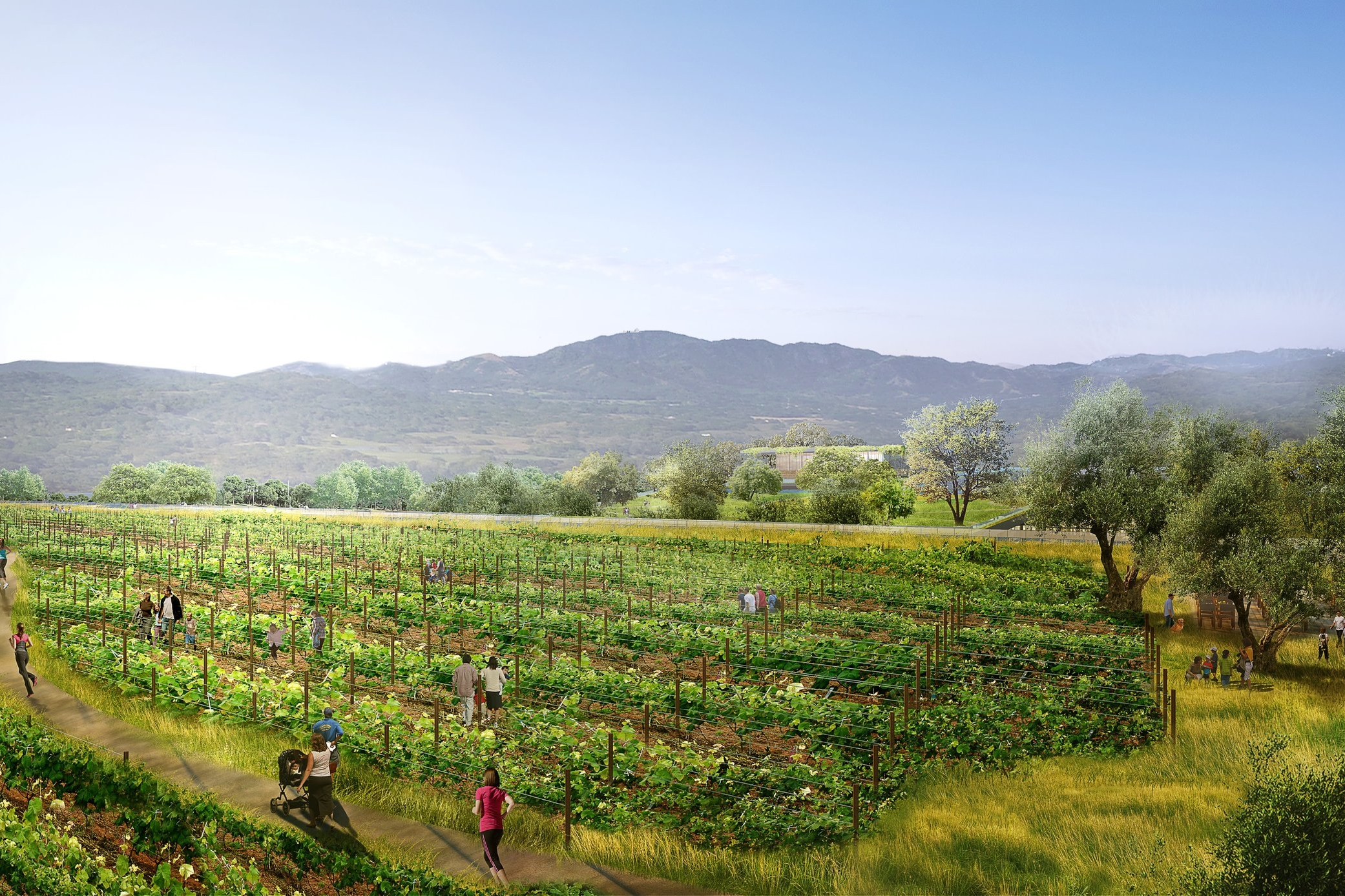 Rooftop Urban Vineyard Overview  | The Hills at Vallco