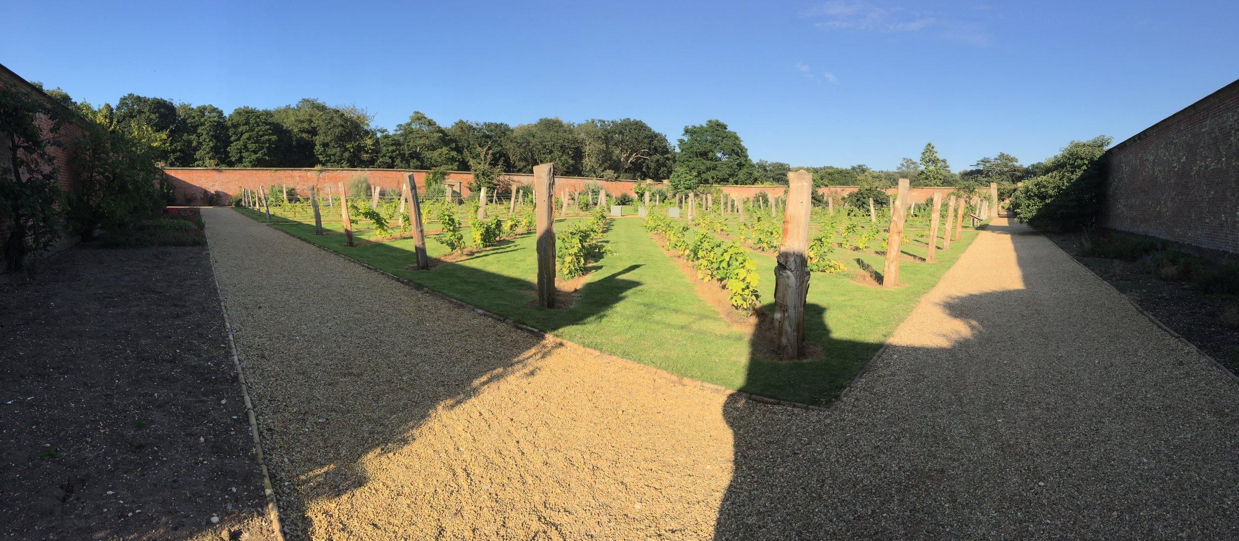 The walled garden vineyard