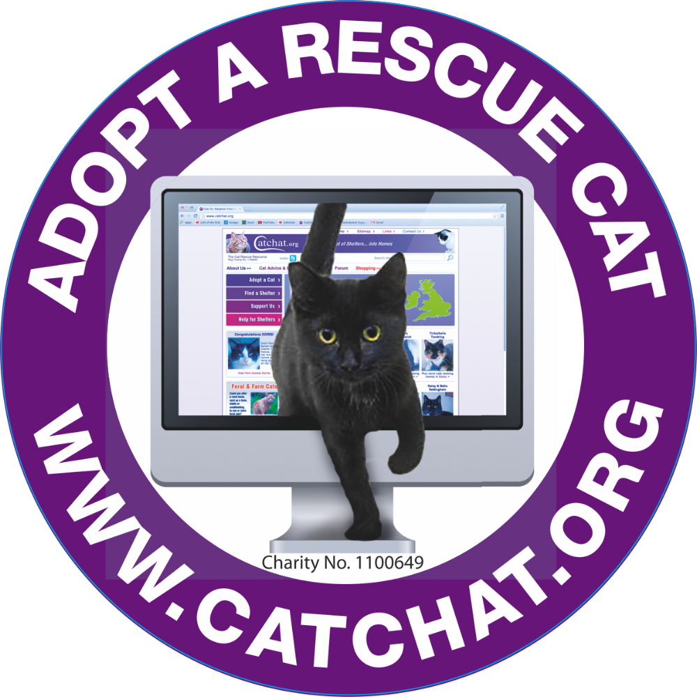 Cat Chat Organisation